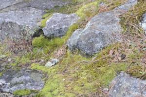 moss rocks-3