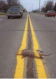cluetrain roadkill
